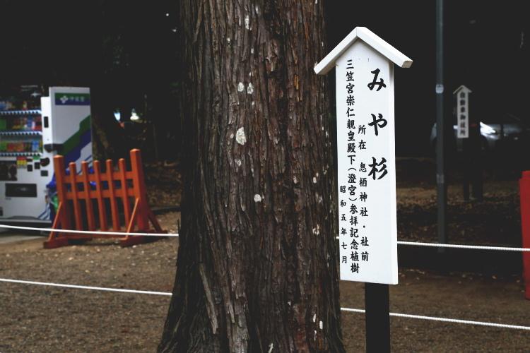 息栖神社のみや杉
