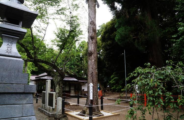 みや杉の全体画像