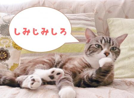 「しみじみしろ」と言っている猫