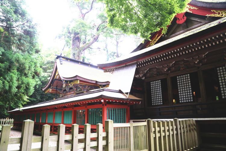 三間社流造の本殿及び拝殿と御神木