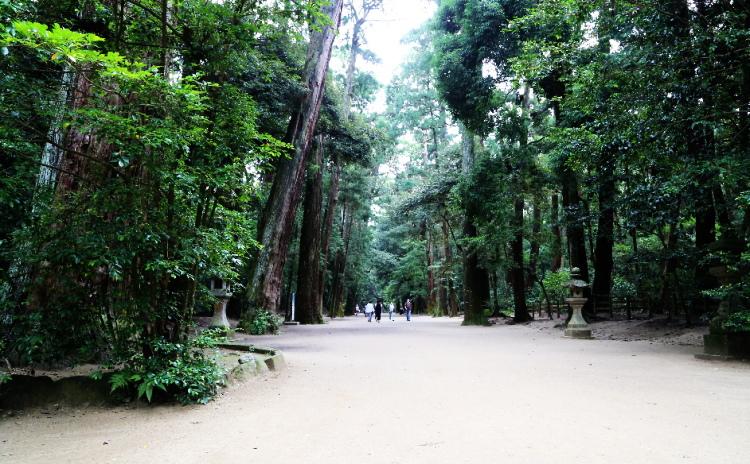 杉の木に囲まれた鹿島神宮の奥参道