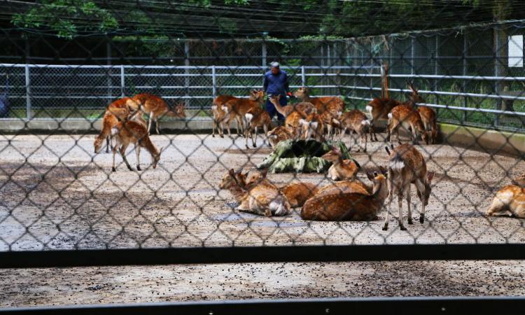 鹿園でくつろぐ鹿たち