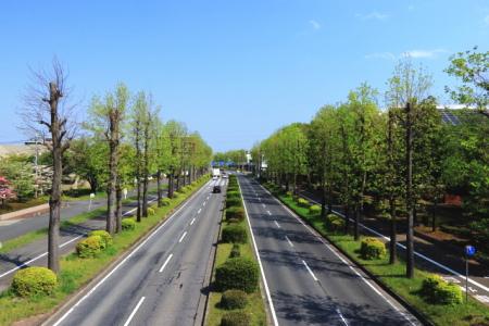 筑波学園都市の道路