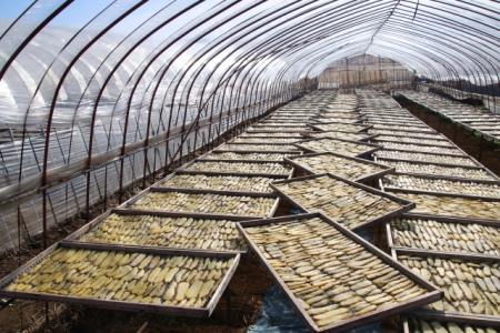 干し芋を作っているビニールハウス