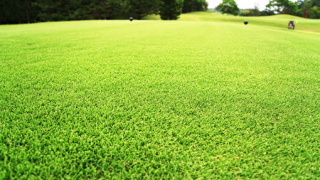 芝生が敷き詰められたゴルフ場