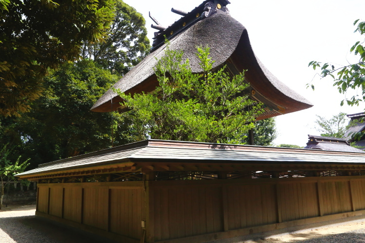 茅葺屋根の美しい本殿を裏から見たところ