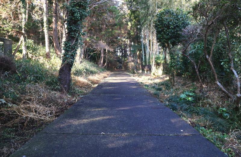 林に囲まれた表参道