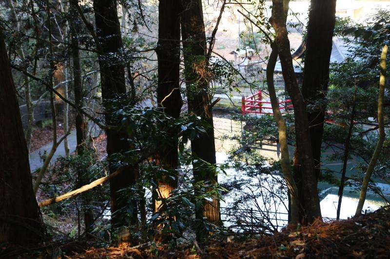 参道の木の隙間から見える厳島神社の本殿