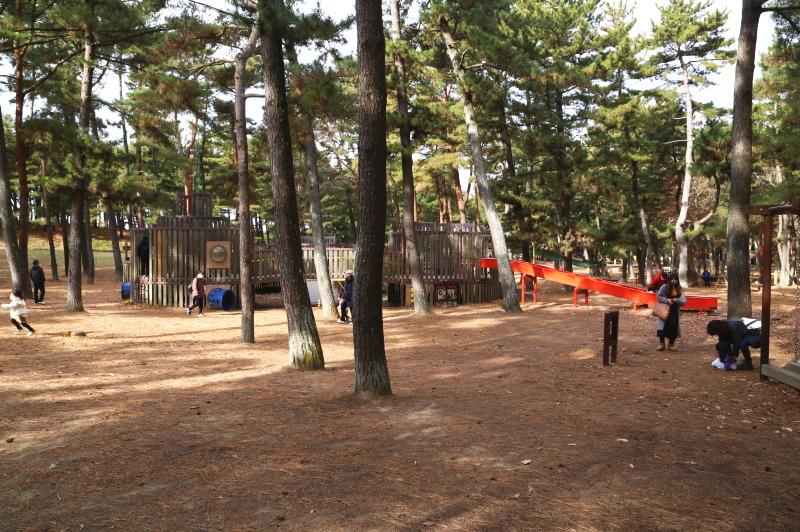 国営ひたち海浜公園の林間アスレチック広場