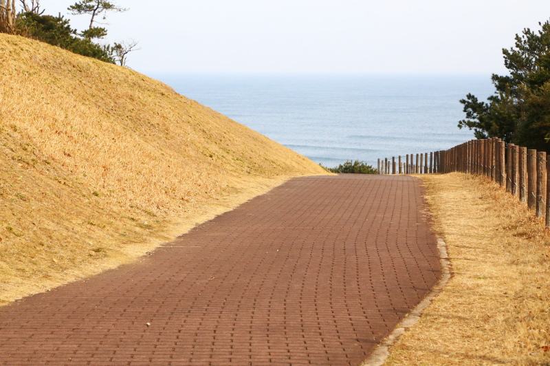鹿島灘海浜公園のピクニック広場に行く道