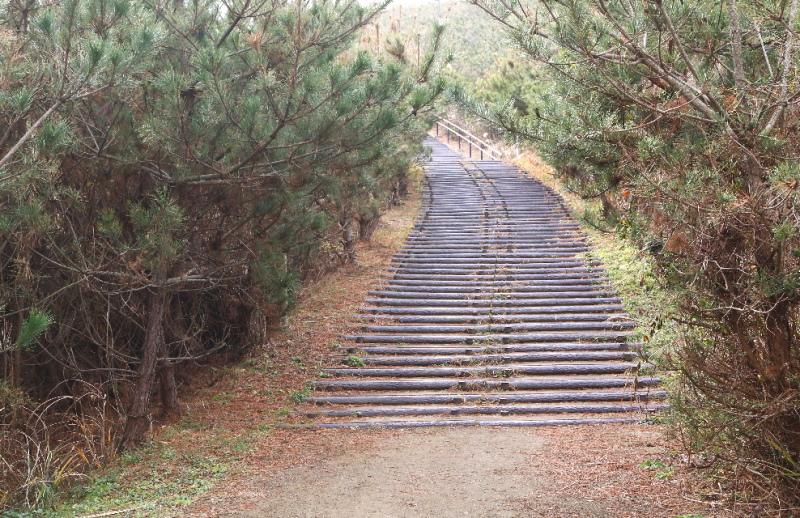 鹿島灘海浜公園の多目的広場の方に上って行く道